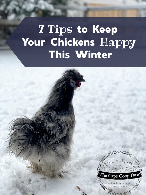 7 Tips to Keep Your Chicken Happy This Winter